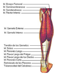 Roturas musculares